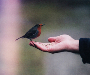 bird, cold, and feed image
