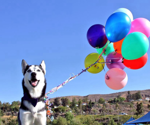 Image by Miles The Husky