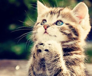 cute ♥ cat image