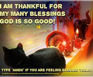 cat, inspiration, and thankful image