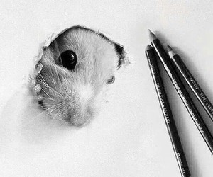 mouse and draw image