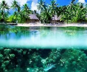 summer, sea, and paradise image