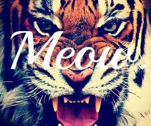 tiger, meow, and animal image