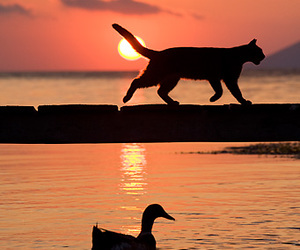 animals, walking, and cat image