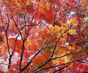 autumn, branches, and fabulous image