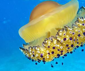 jellyfish and sea image