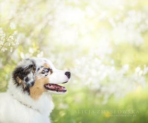 adorable and dog image