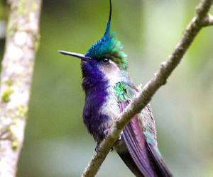 beauty, bird, and colors image