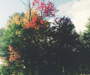 colors, fall, and new england image