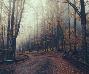 autum, forest, and street image