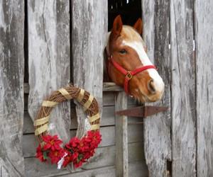 adorable, christmas, and fence image