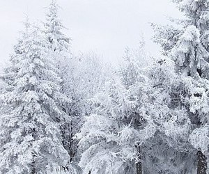 cold, white, and winter image