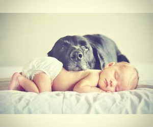 baby, dog, and love image