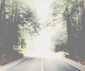 road, forest, and header image