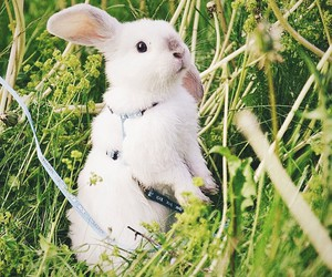 adorable, rabbit, and summer image