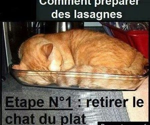 chat, french, and humour image