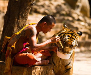 tiger, monk, and animal image