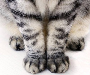 cat, kitten, and cat paws image