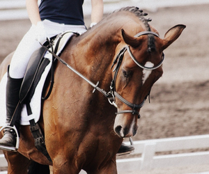 dressage, horse, and equestrian image