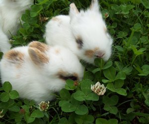 cute, bunny, and nature image
