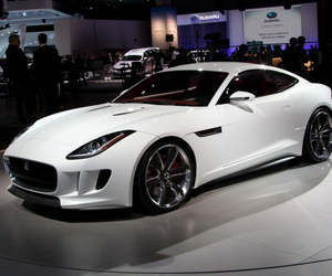 in love, white, and jaguar image