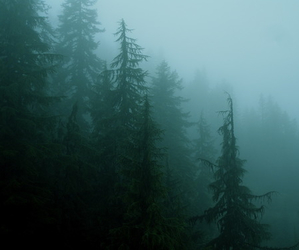 forest, trees, and green image