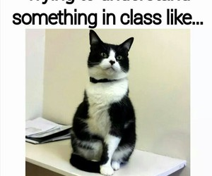cat, funny, and class image