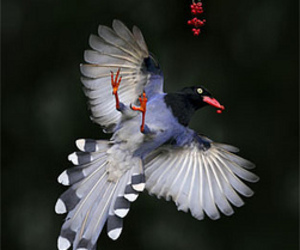 birds and wings image