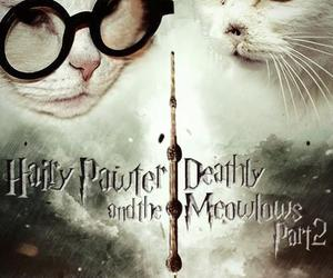cat and harry potter image