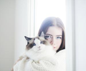 blue eyes, cat, and fashion image