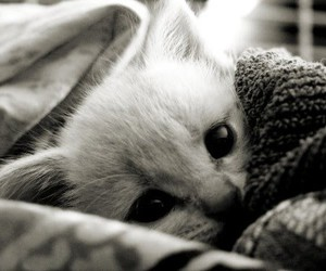 b&w, cute, and cat image