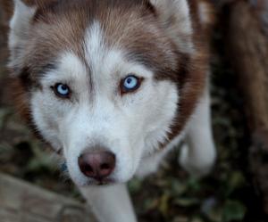 animal, wolf, and dog image