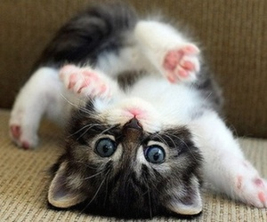 adorable, kitten, and playful image