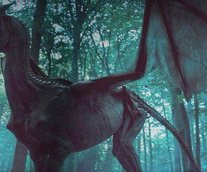 thestral image