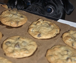 dog, Cookies, and eyes image