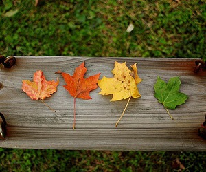 leaves, photography, and fall image