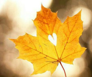 november, autumn, and heart image