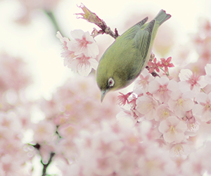 bird, flowers, and pink image