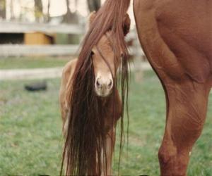تفسير ذيل الحصان في الحلم   رؤيا ذيل الفرس في المنام