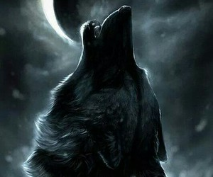 wolf, moon, and night image