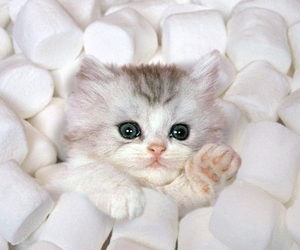 adorable, fluffy, and marshmallows image