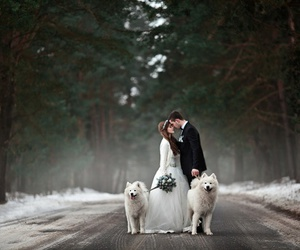wedding, dog, and couple image