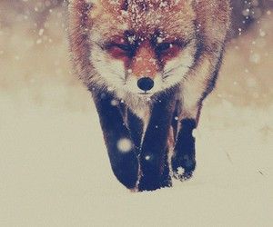 fox, snow, and animal image