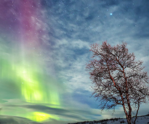 tree, finland, and sky image