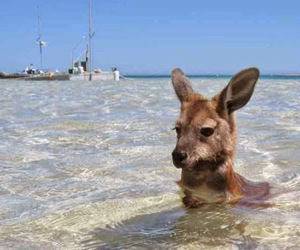 kangaroo, summer, and animal image