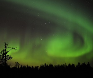 finland, forest, and green image