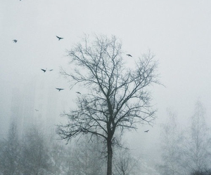 tree, snow, and nature image