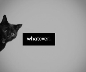 cat, whatever, and black image