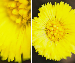 flower, macro, and photography image