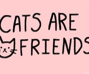 cat, friends, and pink image
